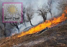 توضیحات استاندار کهگیلویه و بویراحمد در رابطه با آتش سوزی جنگلهای گچساران