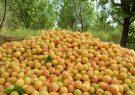 تولید سالانه ۳۰۰ هزار تن میوه در کهگیلویه و بویراحمد